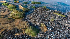 Mussels cast ashore after a storm. Sea coast dotted with mussel shells on the seashore near Odessa, Ukraine stock images