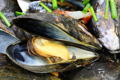 Mussels and Chives Stock Image