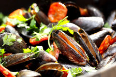 Mussels with chorizo and parsley in a pan Stock Photography