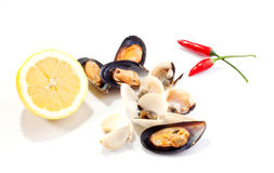 Mussels and clams Royalty Free Stock Photography