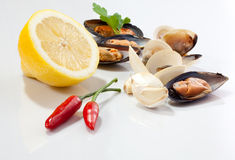 Mussels and clams Stock Images