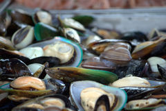 Mussels and clams Stock Photos