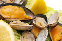 Mussels and clams Stock Image
