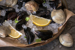 Mussels and Clams on Ice. Fresh from the Market Royalty Free Stock Photos