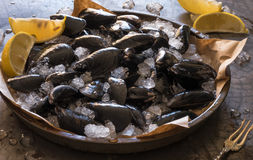 Mussels and Clams on Ice. Fresh from the Market Stock Images