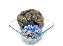 Mussels and clams in two net bags on glass bowl Royalty Free Stock Image