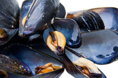 Mussels close views Stock Image