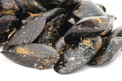 Mussels closeup Stock Image