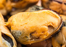 Mussels closeup Royalty Free Stock Photography