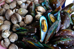 Mussels & cockles Stock Images