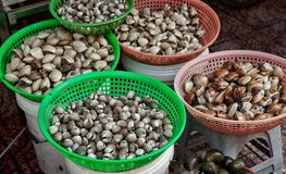 Mussels and cockles for sale. Mussells cockles and shellfish for sale in  ben thanh market Royalty Free Stock Photos