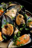 Mussels in coconut milk with lemongrass Stock Images