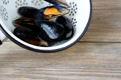 Mussels in a colander Royalty Free Stock Photo