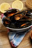 Mussels cook at steam technique culinary art Royalty Free Stock Photography