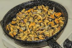 Mussels are cooked in a frying pan. On the stove Royalty Free Stock Photography