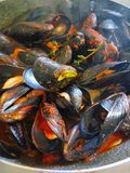 Mussels. Cooked in a pot, italian style Royalty Free Stock Photos