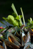 Mussels Cooked with Thai Herbs. Close up of mussels and Thai herbs royalty free stock photo
