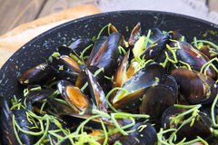Mussels cooked in wine Royalty Free Stock Image