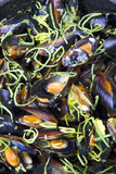 Mussels cooked in wine Royalty Free Stock Photos
