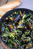 Mussels cooked in wine Stock Image