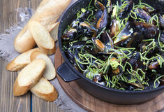 Mussels cooked in wine Stock Photography