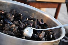 Mussels cooking. A bowl of mussels being cooked royalty free stock photography