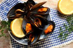 Mussels cooking seafood ingredient crustacean Stock Photos