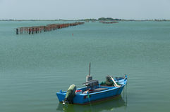 Mussels cultivation, Scardovari lagoon, Adriatic sea, Italy. Stock Photography
