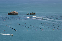 Mussels farm, North Island of New Zealand. Mussels farm on North Island of New Zealand Royalty Free Stock Photo