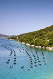 Mussels farming, Croatia Stock Images