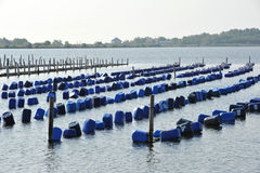 Mussels farming in Thailand Stock Image