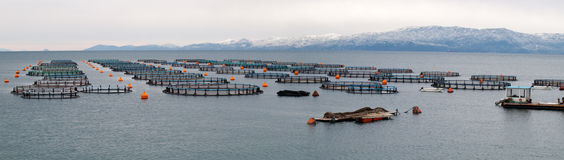 Mussels,  fish and mollusks farm of  in Greece Royalty Free Stock Image