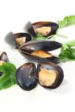 Mussels with flat leaf parsley Stock Photos