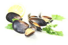Mussels with flat leaf parsley and Lemon Stock Images