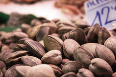 Mussels on food market close up 2 Stock Image
