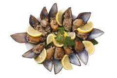 Mussels/food. Photographed in studio environment isolated stuffed mussels Royalty Free Stock Image