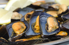 Mussels in foreground Stock Images