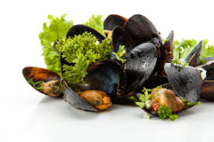 Mussels. Fresh mussels with herbs and garlic on a white background royalty free stock photography