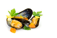 Mussels. Fresh mussels isolated on white royalty free stock photo