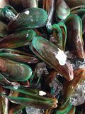 Mussels. Fresh Mussels shell Royalty Free Stock Images