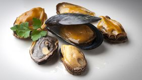 Mussels. Fresh and tasty mussels, image to use in graphic design Stock Images