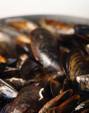 Mussels on a frying pan Stock Image