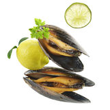 Mussels  With Garlic Sauce Stock Images