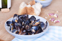 Mussels in garlic souce Stock Images