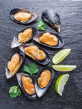 Mussels on the graphite background. Boiled mussels on the graphite background royalty free stock image