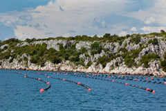 Mussels growing in Adriatic sea, Croatia Royalty Free Stock Photos