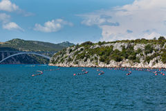 Mussels growing in Adriatic sea, Croatia Royalty Free Stock Photography