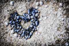 Mussels growing in shape of heart Stock Images
