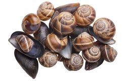 Mussels i ślimaczki Obraz Stock