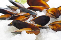 Mussels on ice Stock Photo
